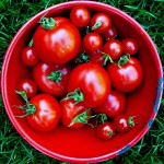 Homemade Ketchup From Vine Ripened Tomatoes