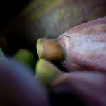 Dazzling Fig N Pig Appetizer