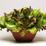Veggies & Herbs for Window Boxes, Gift Wines & Gina Barreca