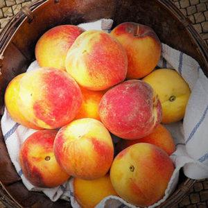 peaches 2_post