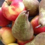 Super Easy & Fast Fresh Fruit Crumble (Gluten-Free)