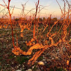 Rhone vineyards
