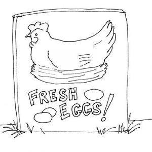 PerfectOmelet_Fresh Eggs_Illustration