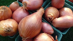 shallots_Seacoast Eat Local_Flickr